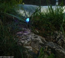 Golfball im Rough angestrahlt mit dem speziellen Licht des Golfball-Uhu LED Ballfinders.
