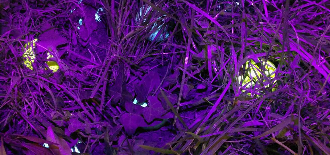 Anwendung Golfball-Uhu LED Ballfinder in Dunkelheit