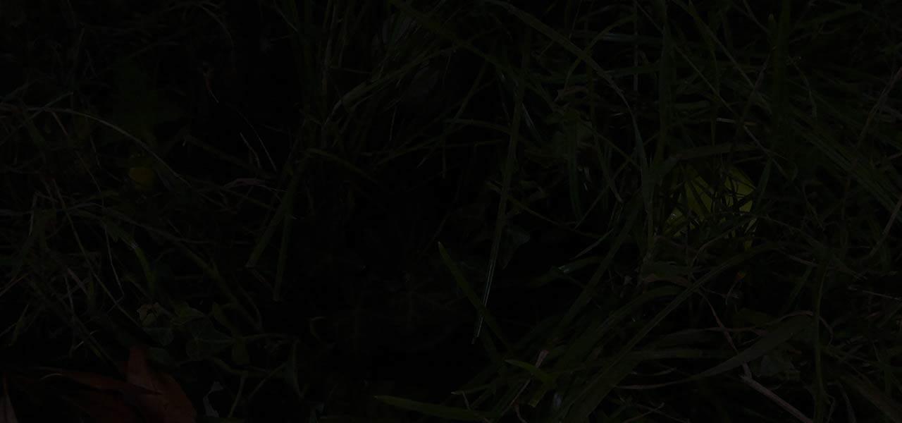 Ohne Golfball-Uhu LED Ballfinder in Dunkelheit